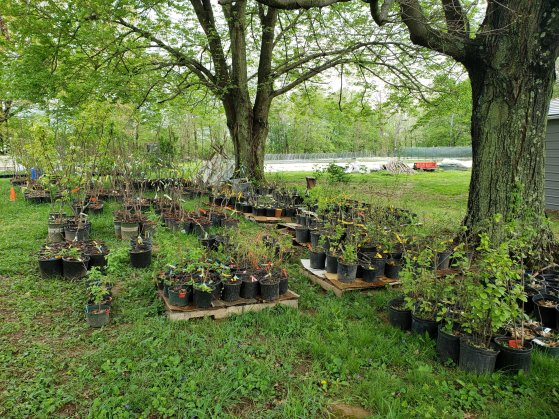 Cincinnati Permaculture Insitute Nursery at Treasure Lake