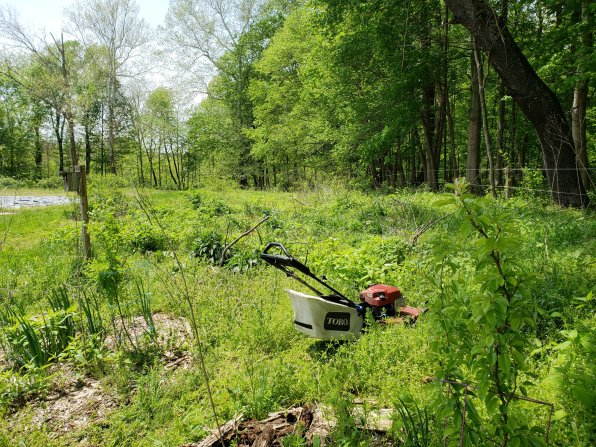 chop and drop in hedgerow with mower and bag