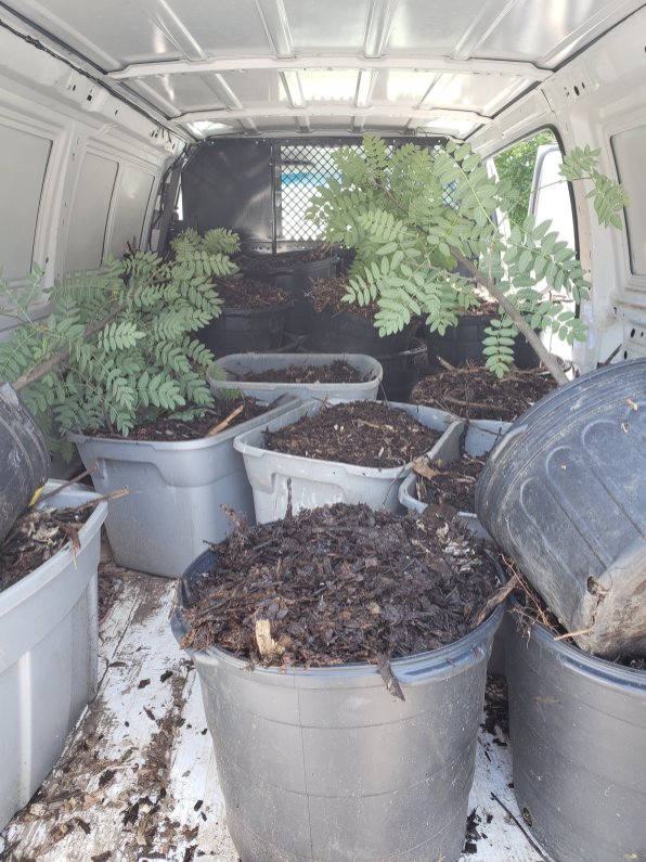 transport of trees and materials for permaculture guild development