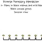 Permaculture Timber and Forestry animation 2