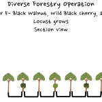 Permaculture Timber and Forestry animation 5