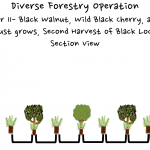 Permaculture Timber and Forestry animation 10