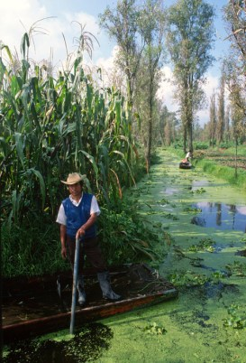 The canals of water, the people who work them and the plants that provide. from http://www.adalberto.mx/enfoque/2012/01/03/las-chinampas-mas-alla-de-las-garnachas-y-los-mariachis/