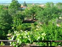 Food Forests or Forest Gardens | A Permaculture Design ...