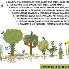 Forest Canopy Diagram Arduino Wiring Food Forests Or Gardens A Permaculture Design