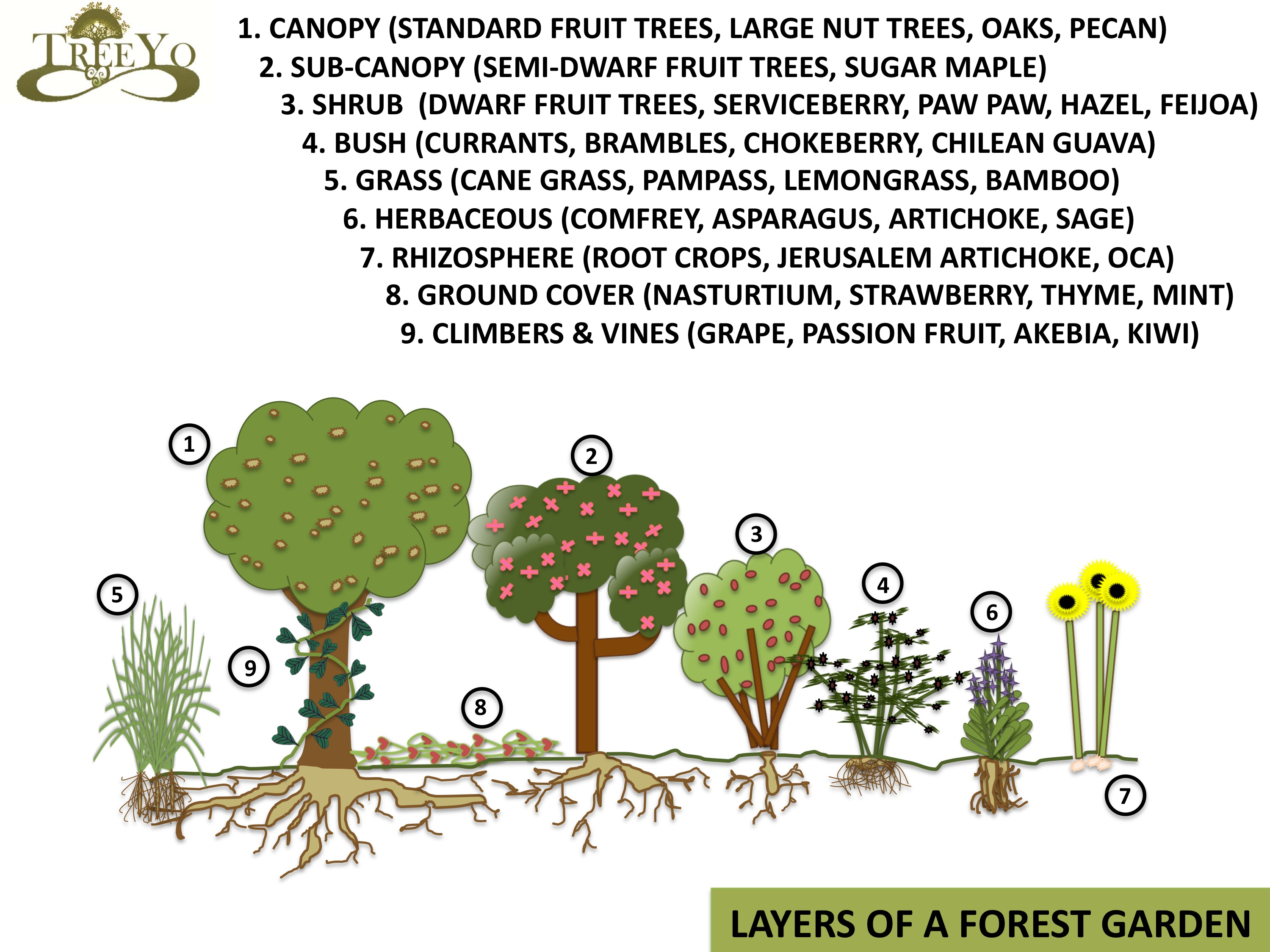Trees And Their Uses