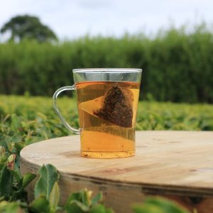 afternoon pyramid bag being brewed in a tea garden