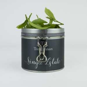 first flush fresh tea leaves grown in england