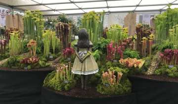 A 'celebritea' who's who at the RHS Chelsea Flower Show 2019