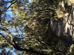 Descending through the moorland/heath