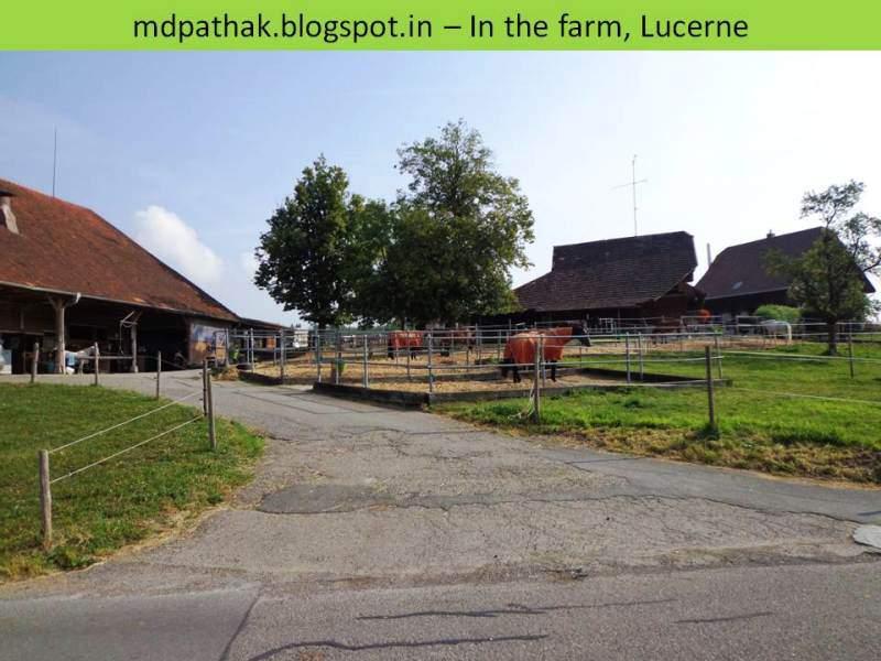 farmhouse lucerne