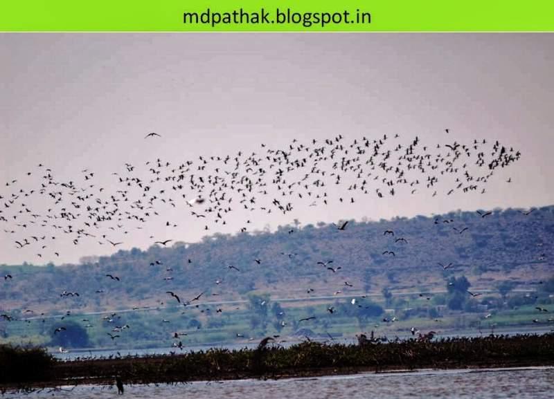 bhigwan bird watching
