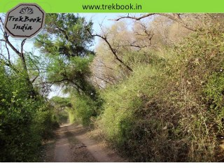 Dense jungle, Ranthambore, India