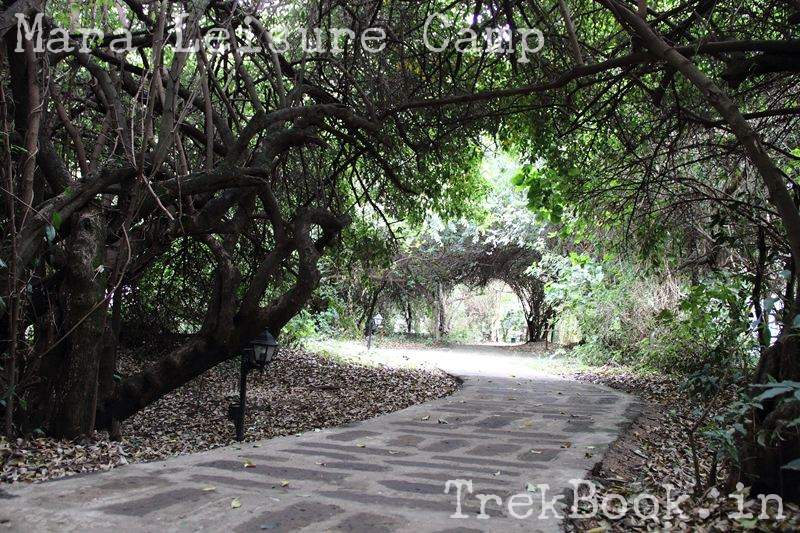 Mara Leisure Camp way to the rooms through jungle