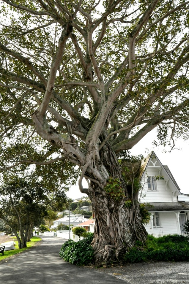 Tree, Russell