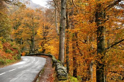 """The road to Derwentwater Lake is in a """"bright spot""""!"""