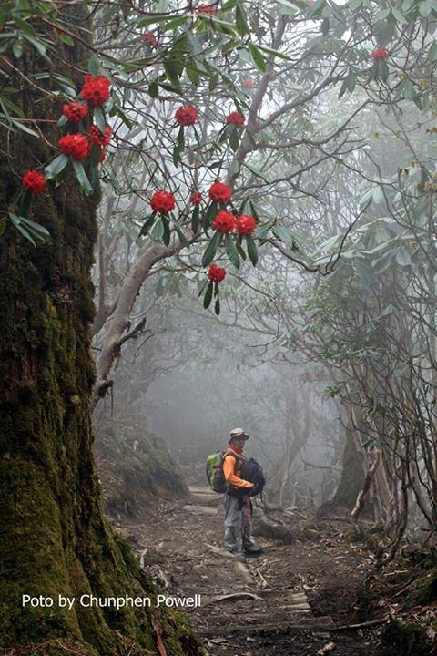 barbatum jungle