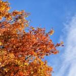 家族で登山 紅葉真っ盛り 金時山
