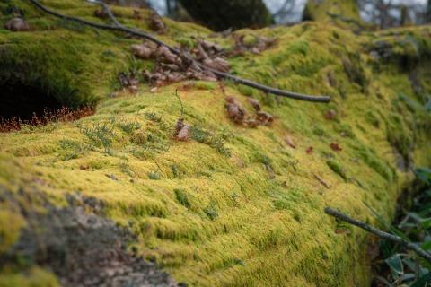 倒木を覆う苔