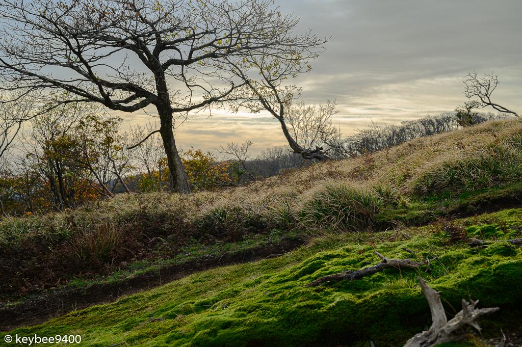 晩秋に息づく緑苔