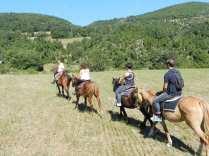 tra i campi a cavalli