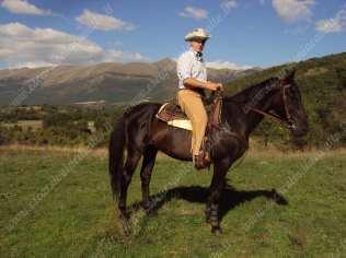 trekking a cavallo singolo