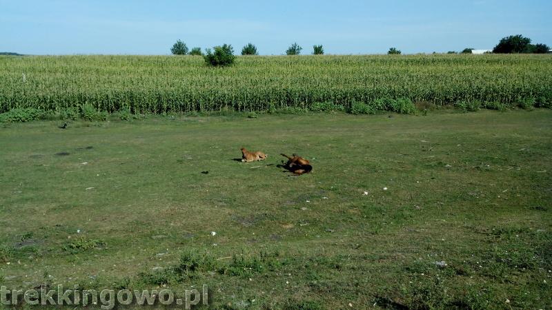 Mołdawia - Dzień 4 konie zabawa trekkingowo