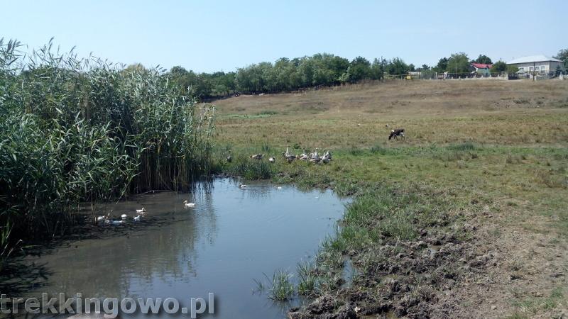 Mołdawia - Dzień 4 Strycza krajobraz gęsi