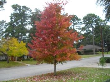 Pretty colors on Steve's tree