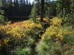 Trail in Indian Heaven