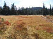 Meadow in Indian Heaven.