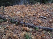 Mother Nature is getting ready for winter with ferns dying back and huckleberry bushes losing their leaves.