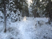I soon got into the first snow on the trail.