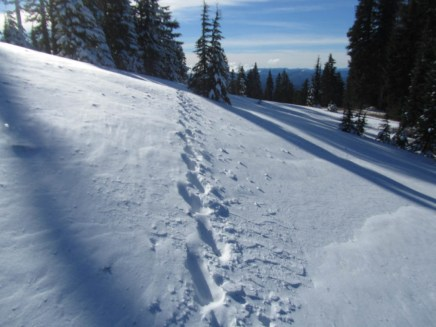 My tracks in the snow on the Paradise Park Loop Trail.