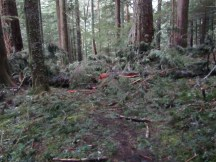 A down tree blocking the trail