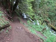 Heading back down the trail next to Wahkeena Creek.
