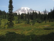 A view of Rainier from one of many meadows we past.