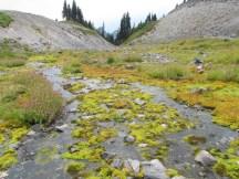Rainier - Spring Feed Creek