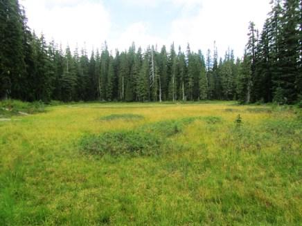 Chenamus Meadow