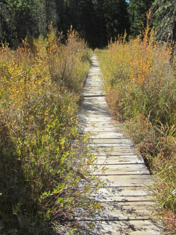 Photographically you have to love this boardwalk.