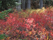 Fall Color along the trail.