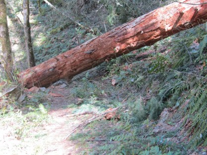With this big log you could only go way off trail to get around it.