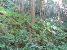 This hike is note for the lush forest it goes through