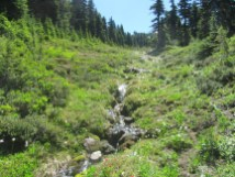 On Timberline trail heading to Elk Cover there were still a number of small snow fed creeks flowing.