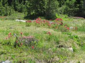 What we saw the most of was Indian Paint Brush.