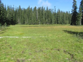 Meadow at the end of Chenamus Lake.