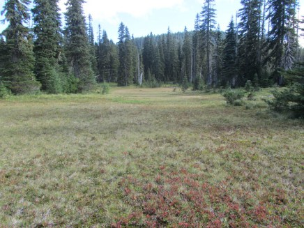 I took the usual route up to Exit Meadow and to the abandon Cascade Crest Trail.