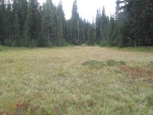 There is a large meadow tied in with this pond. I decide from here to run a compass bearing to the Forest Service Trail.