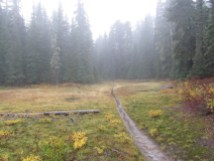 One of the few meadows the trail pass through to Indian Race Track.