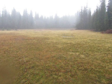 Indian Race Track Meadow. Fall leaves were almost gone and bog was returning.
